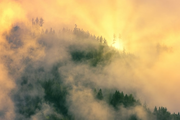 Groene bomen vallende mist