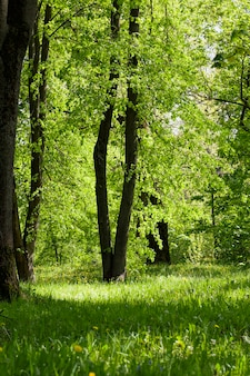 Groene bomenachtergrond in bos