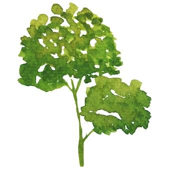 Groene boom aquarel