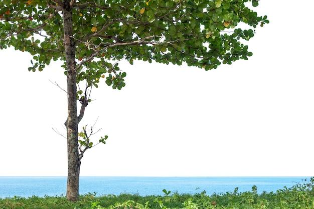 Groene boom die op wit met het knippen van weg wordt geïsoleerd