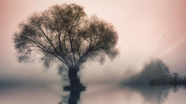 Groene boom op waterlichaam
