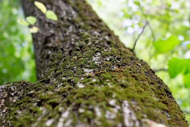 Groene boom van beneden naar boven, close-up.