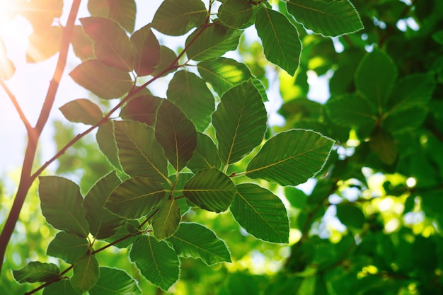 Groene boombladeren en takken in de aard in de herfst, groene achtergrond
