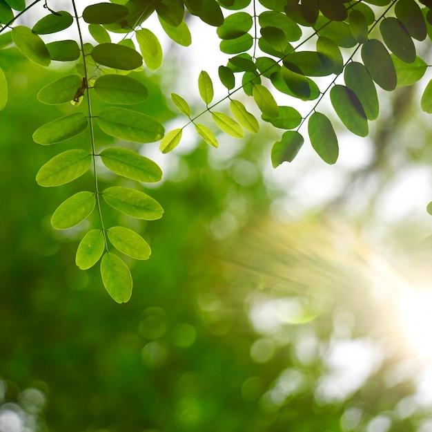 Groene boombladeren geweven in de aard in de zomer, groene achtergrond