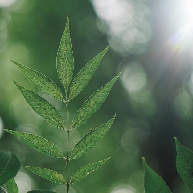 Groene boombladeren geweven in de herfst in de aard