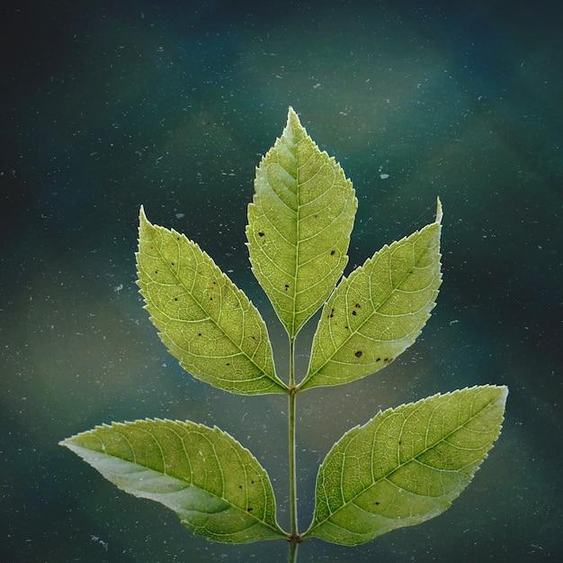 Groene boombladeren in de natuur, groene achtergrond