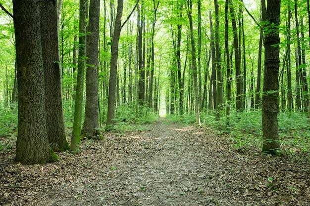 Groene bos bomen. natuur groen hout zonlicht achtergronden Premium Foto