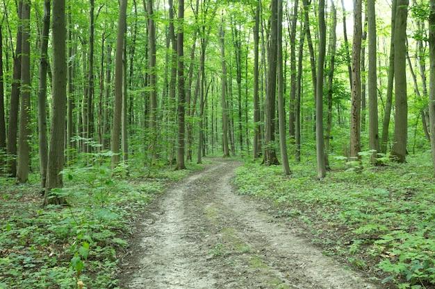 Groene bos bomen. natuur groen hout zonlicht achtergronden