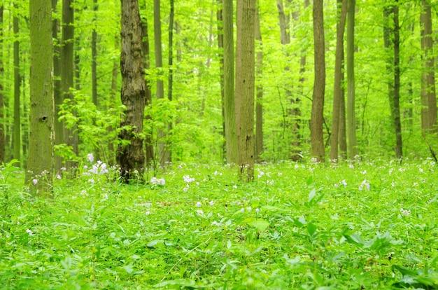 Groene bosachtergrond in een zonnige dag