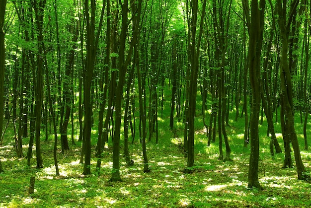 Groene bosachtergrond in zonnige dag