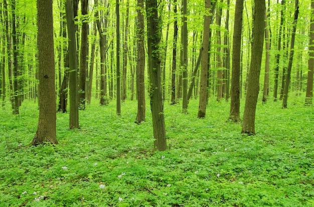 Groene bosachtergrond op een zonnige dag