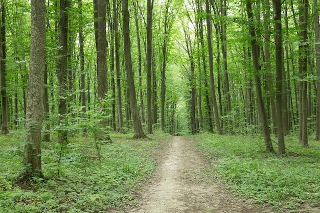 Groene bosbomen