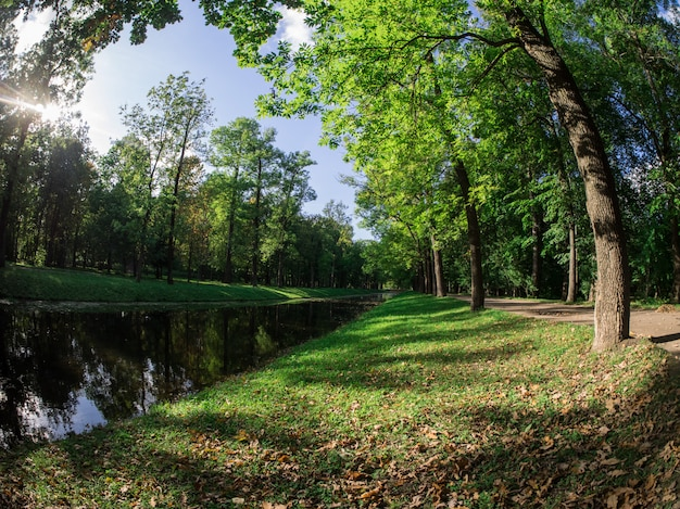 Groene bospark openluchtachtergrond.