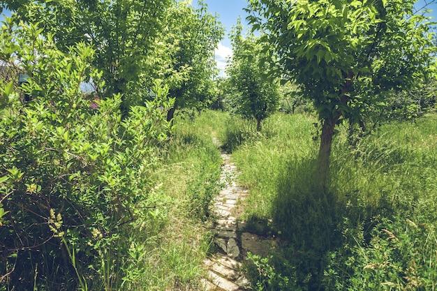 Groene bosscène van pad dat in de verte verdwijnt