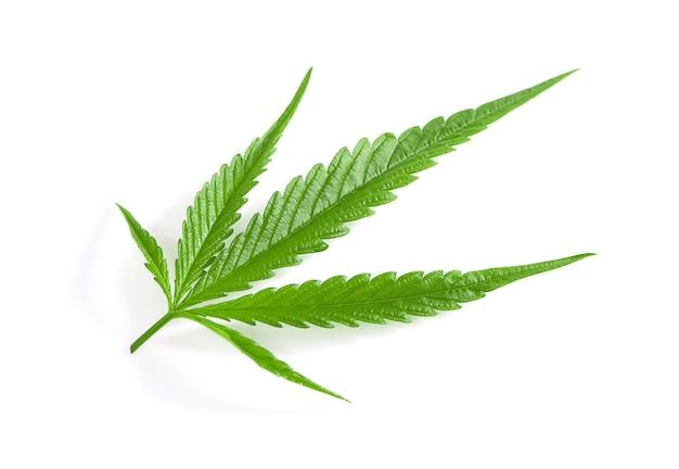 Groene cannabis bladeren geïsoleerd op een witte achtergrond