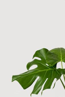 Groene close-up doorbladert met exemplaarruimte