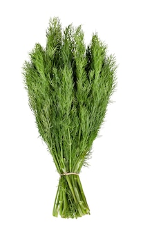 Groene dille geïsoleerd op een witte achtergrond