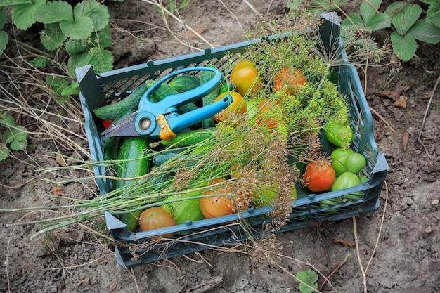 Groene doos liggend op de grond met verse tomaten, courgette, dille en komkommers