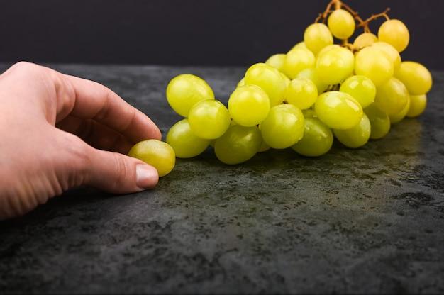 Groene druiven op een zwarte achtergrond. een hand houdt druiven in de lucht op een zwarte achtergrond. volumetrische wijnmakerij. een bos van groene struikdruiven.