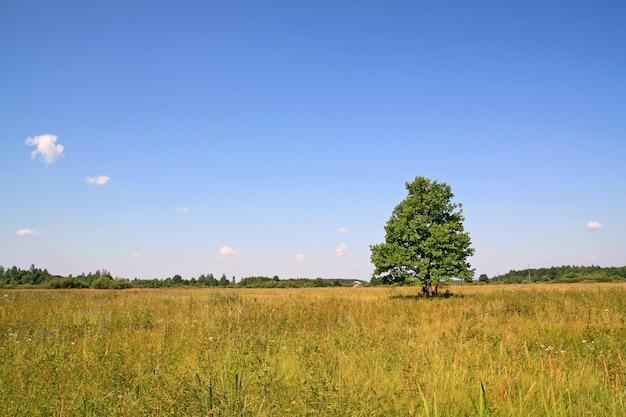 Groene eik op geel veld