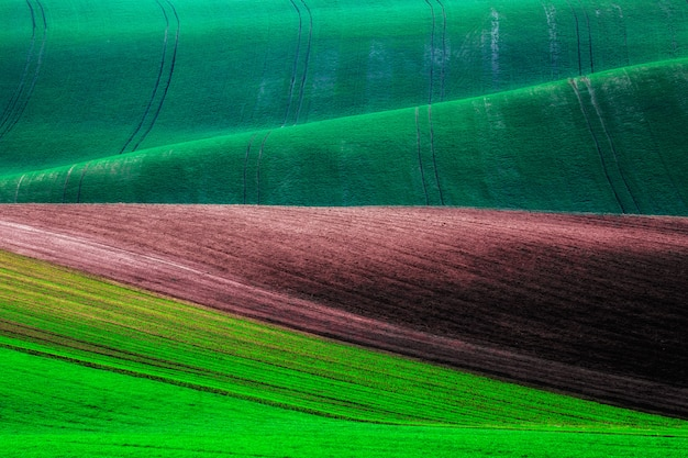 Groene en bruine golvenheuvels de achtergrond in van zuid-moravië, tsjechische republiek