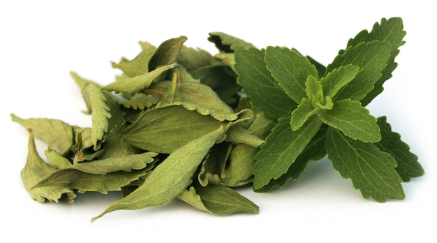 Groene en dired stevia bladeren op witte achtergrond