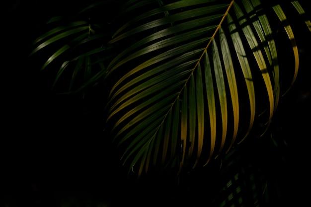 Groene en gele palmbladen in het bos
