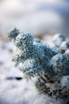Groene en witte plant in close-up