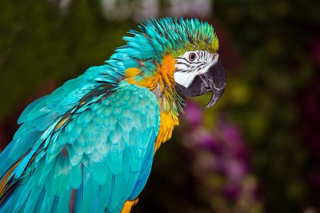 Groene exotische ara papegaai close-up weergave