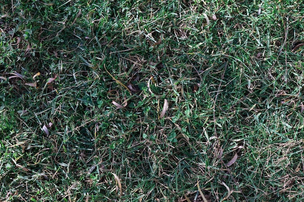 Groene frass op de grond