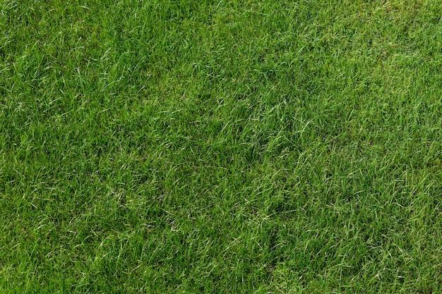 Groene gazon achtergrond. bovenaanzicht