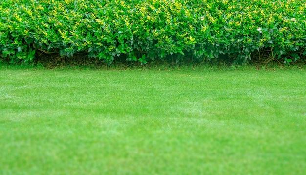 Groene gazonachtergrond