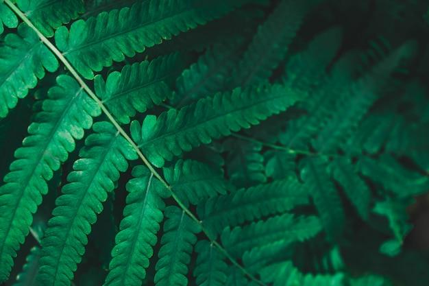 Groene gebladerte blad aard textuur achtergrond voor vintage retro versieren ontwerp.