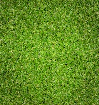 Groene gras textuur achtergrond.