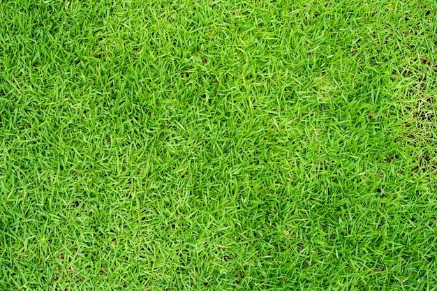 Groene grasachtergrond of het groene natuurlijke gebruik van de muurtextuur voor ontwerp.