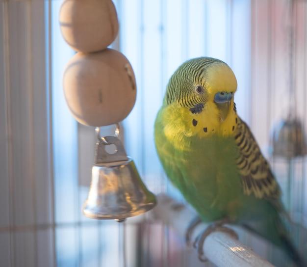 Groene grasparkiet papegaai close-up hoofd portret in kooi