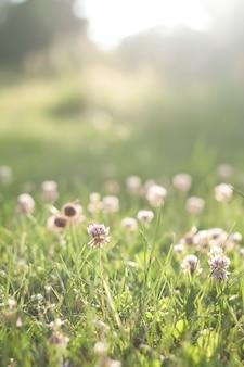 Groene grassen met bloemen voor zonsondergang, vervagen achtergrond
