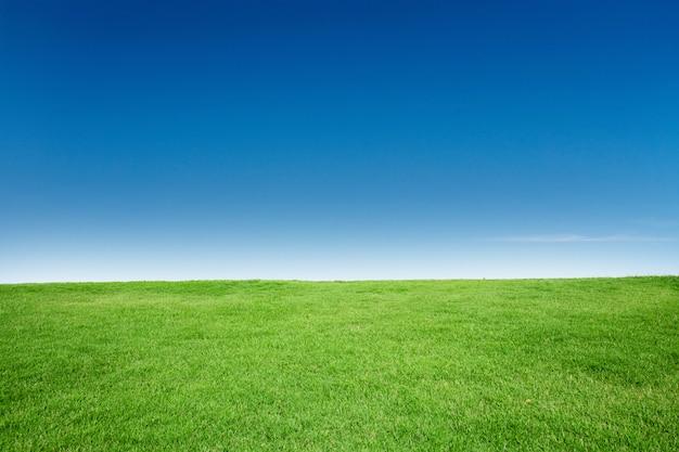 Groene grastextuur met blang copyspace tegen blauwe hemel