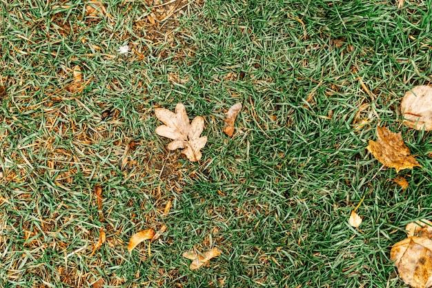 Groene grastextuur voor achtergrond. groen en geel patroon van de herfstgras. detailopname.