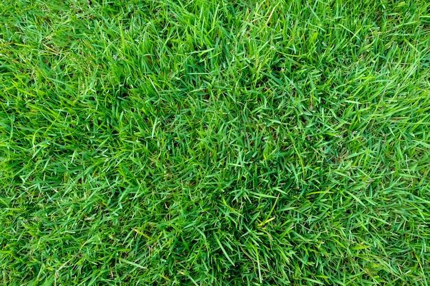 Groene grastextuur voor achtergrond. groen gazonpatroon en textuurachtergrond. detailopname.