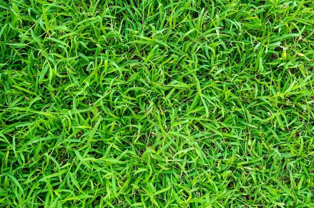 Groene grastextuur voor achtergrond. groen gazonpatroon en textuurachtergrond.