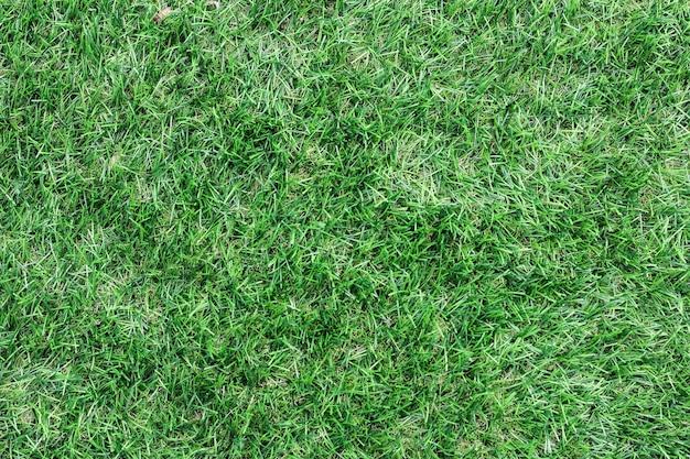 Groene grastextuurachtergrond bovenaanzicht van heldere grastuin ideeconcept dat wordt gebruikt voor het maken van een groene achtergrond, gazon voor het trainen van voetbalveld,