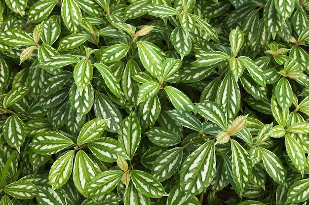 Groene het bladachtergrond van de close-up