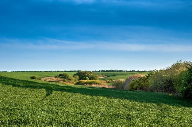 Groene heuvels van een veld met wintertarwe en lentestruiken en bomen