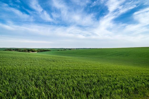 Groene heuvels van veld met wintertarwe en prachtige lucht