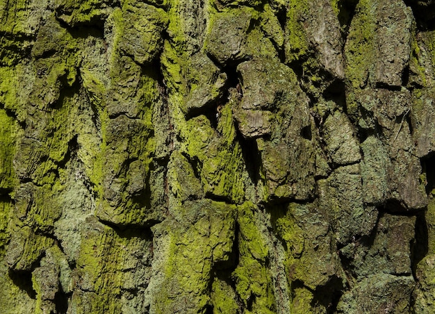 Groene houtstructuur