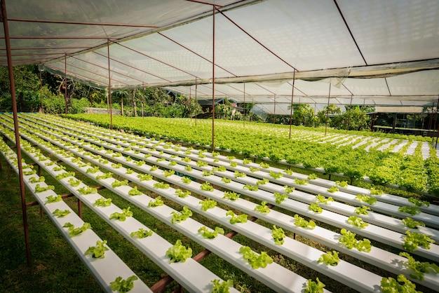 Groene hydrocultuur biologische salade groente in boerderij, thailand.