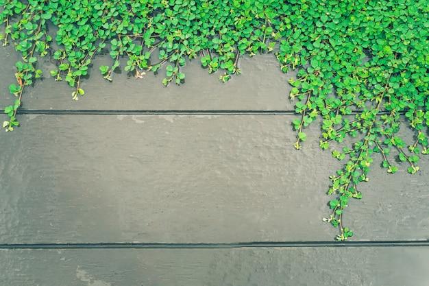 Groene installaties op houten muurachtergrond met exemplaarruimte
