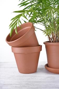 Groene kamerplant in een plastic pot naast terracotta potten op een tafel