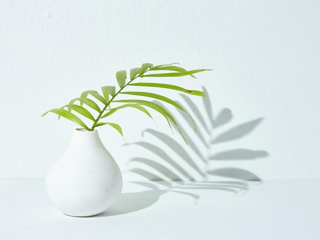 Groene kamerplant in een witte keramische vaas waarvan de schaduw op een wit oppervlak valt